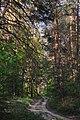 71-249-5035 Dakhnivka Pines DSC 5754.jpg