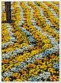 A Sea Of Flowers (II) (24408179308).jpg