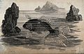 A fish swimming between the rocks in the sea. Etching by Hea Wellcome V0022098.jpg