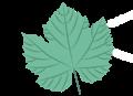 A leaf.png
