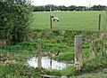 A livestock drinking pool, Napton - geograph.org.uk - 1272874.jpg