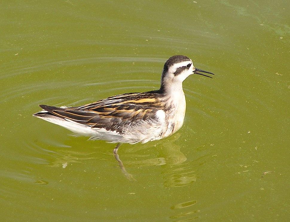 Ab bird 019