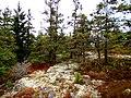 Acadia National Park (8111140890).jpg