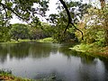 Acharya Jagadish Chandra Bose Indian Botanic Garden - Howrah 2011-03-20 2039.JPG