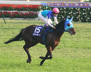 Admire Moon Japanese-bred Thoroughbred racehorse