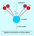 Agitation moléculaire en milieu aqueux.PNG