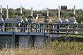 Aironi bianchi, garzette e gabbiani alla stazione Foce - panoramio.jpg