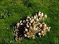 Akershuss Fortress - mushrooms.jpg