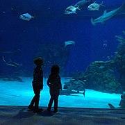 Akvarijum.jpg