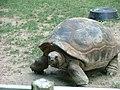 Aldabra2.jpg