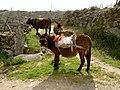 Alfarela de Jales, 5450, Portugal - panoramio.jpg