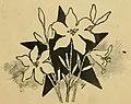 Almanaque de las portenas 1898 (page 69 crop).jpg
