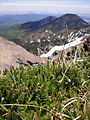 Alpine tundra atop Humphreys Peak.jpg