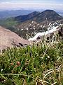 Alpine tundra atop Humphreys Peak.jpg