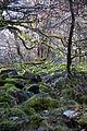 Altkönig Naturpark Taunus 3.jpg