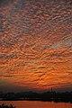 Altocumulus stratiformis - Clouds - Nalban Waterbody - Kolkata 2017-11-13 5859.JPG