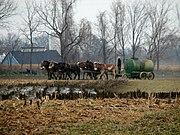 Fermier amish fertilisant son champ