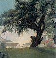 Anônimo - Árvore gigante e caserna.JPG