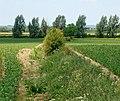 An unkempt hedge near Flecknoe Fields Farm - geograph.org.uk - 1331236.jpg