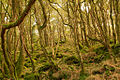 Ancient Welsh woodland.jpg