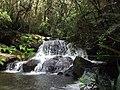 Andasibe-Mantadia National Park 2013 30.jpg