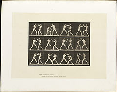 Animal locomotion. Plate 336 (Boston Public Library).jpg