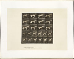 Animal locomotion. Plate 572 (Boston Public Library).jpg