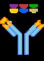 AntibodyAR.png