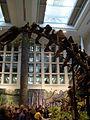 Apatosaurus at the CMNH 04.jpg