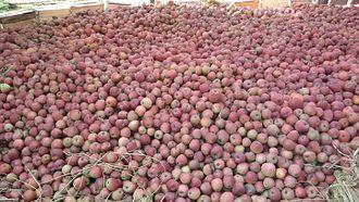 Bijbehara - Apples of tribjee arwani, Bijbehara