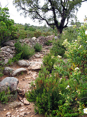 Porto-Vecchio - Ancient path at Araghju