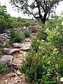 Araghju sentier (premières montées) 1.jpg
