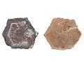 Aragonite-Copper-245576.jpg