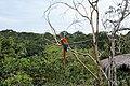 Arara-Manaus-Amazon.jpg