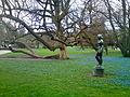 Arboretum-Zuerich.jpg