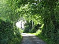 Arched trees by Carrog bungalow - geograph.org.uk - 830972.jpg