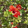 Argotti gardens-IMG 1372.jpg