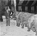 Artiesten treden in circus Boltini op ( Tom Kelling olifant), Bestanddeelnr 914-0999.jpg