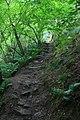 Ascending Parkin Clough - geograph.org.uk - 937871.jpg