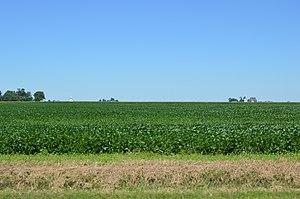 Ashkum Township, Iroquois County, Illinois - Fields west of Ashkum