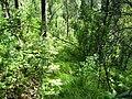 Asinovsky District, Tomsk Oblast, Russia - panoramio (131).jpg