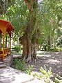 Aswan Botanical Garden 002.jpg