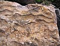 Asymmetrical ripple marks in quartzite (Baraboo Quartzite, upper Paleoproterozoic, ~1.7 Ga; southern shore of Devil's Lake, Devil's Lake State Park, Wisconsin, USA) 1 (18635028718).jpg
