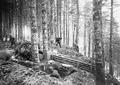 Ausbesserungsarbeiten an einem Schützengraben - CH-BAR - 3240430.tif