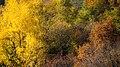 Autumn in Burcina-1.jpg