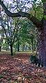 Autumn in Whitworth Park I - panoramio (2).jpg