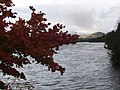 Autumn tints at Kendoon Loch - geograph.org.uk - 998775.jpg