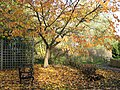 Autumnal picnic spot - geograph.org.uk - 1037326.jpg