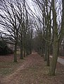 Avenue of trees - geograph.org.uk - 1122451.jpg