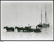 Kangaroo Island-European settlement-B-19481